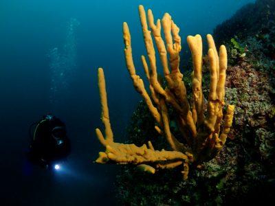 Održan 2. Kup sv. Nikole u podvodnoj fotografiji